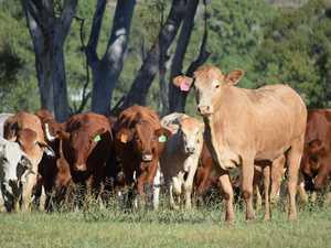CQ region has largest rural debt across QLD, report reveals