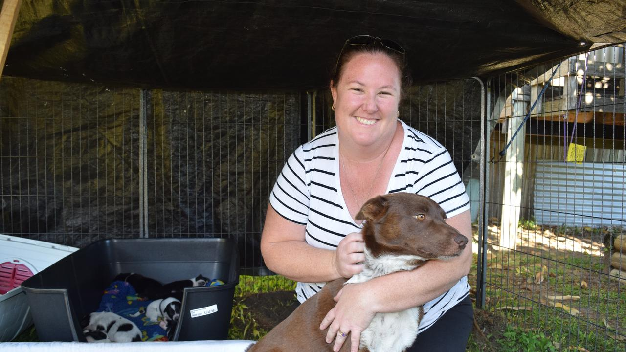 Helping Hands Animal Rescue Bowen president Kirsty Short with Piper and her nine puppies. The rescue organisation is calling out for more foster carers. Photo: Elyse Wurm
