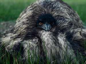 'Heartbreaking' story behind emu photo