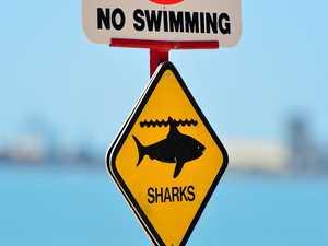 Shark sightings close Mid North Coast beaches