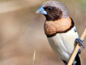 One of the finch species that calls our region home
