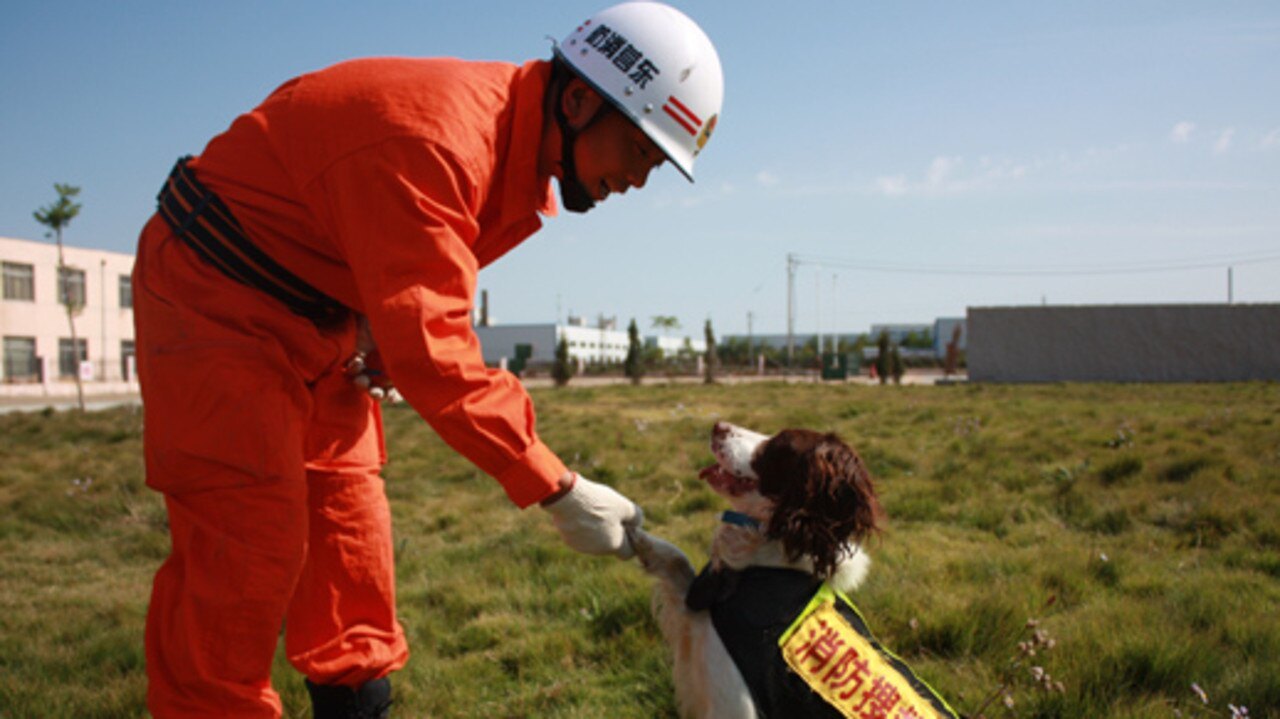 The search and rescue dog, Tianbao, has died after 13 years. Picture: Shandong Fire Protection
