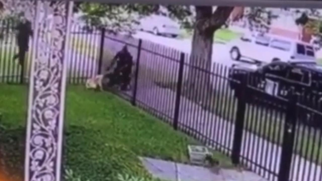 Disturbing footage of a Detroit cop shooting a dog in the face and killing him has surfaced online, with social media users calling for the police officer to be brought to justice. Picture: Instagram @animalhopeandwellness