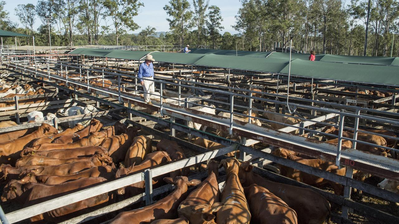 Prices reached as high as $4.80/kg.