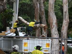 Council to remove unhealthy trees at Boyne Island