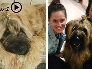 Incredible transformation: How this damaged rescue dog now changes lives