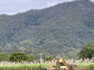 Season high: Two sugar mills record best throughput
