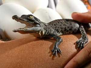 $40m croc farm to create more than 200 jobs
