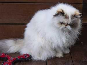 FELINE FREE: Council introduces landmark cat ban