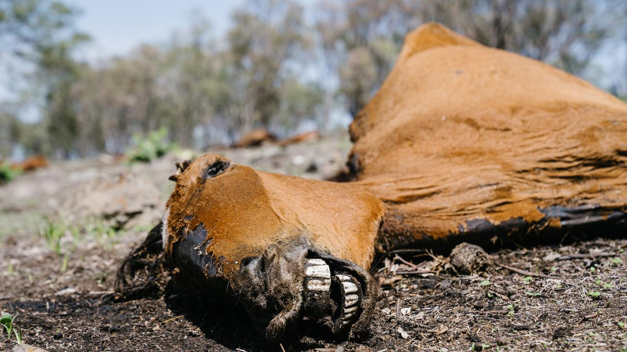A man will face court after a number of dead and malnourished horses were found on a property near Toowoomba.