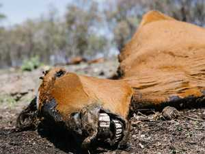 Man charged over death of 13 horses
