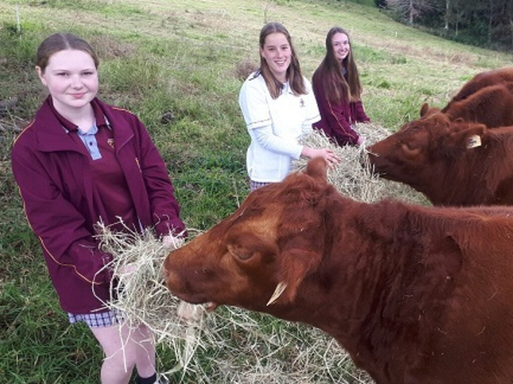 Alstonville High students Annie Tolman, Zoe Fairfull and Clara Tolman who won the national 2020 Women in Agri-tech Pitch Competition.