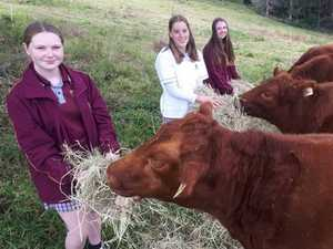 Alstonville High's agriculture app impresses judges