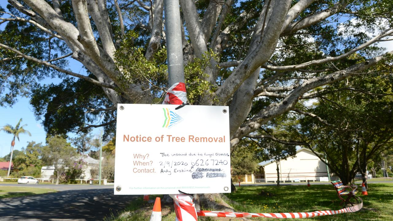Byron Shire Council will next week remove a weeping fig on the corner of Dalley St and Jubilee Avenue in Mullumbimby due to safety risks.