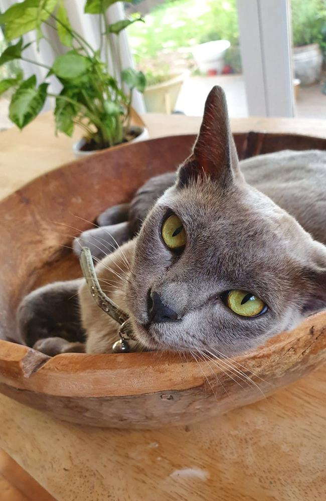 Pikichu the Burmese cat fought for five days after the attack, but sadly passed away on Tuesday.