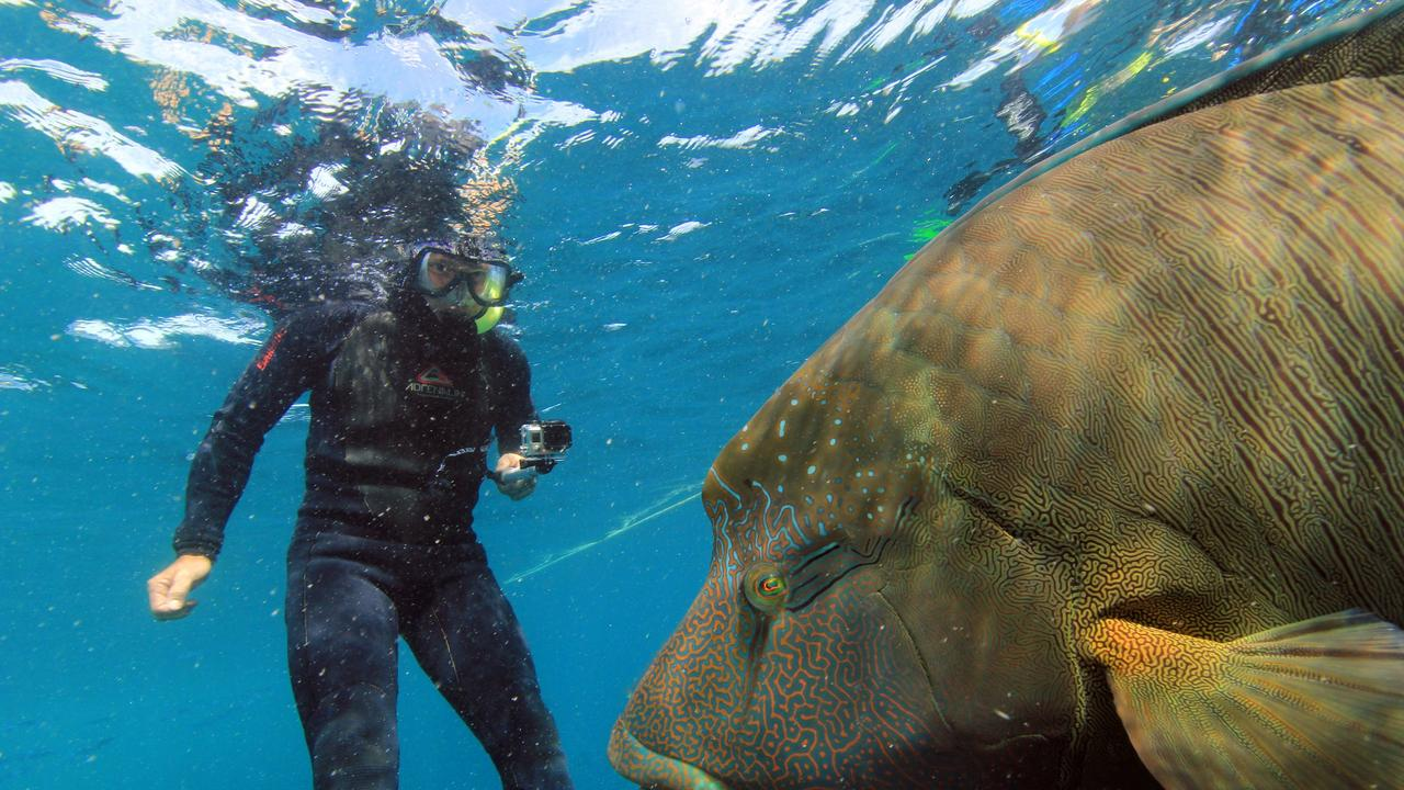 Tony Fontes snorkelling in the Great Barrier Reef with a humphead wrasse.