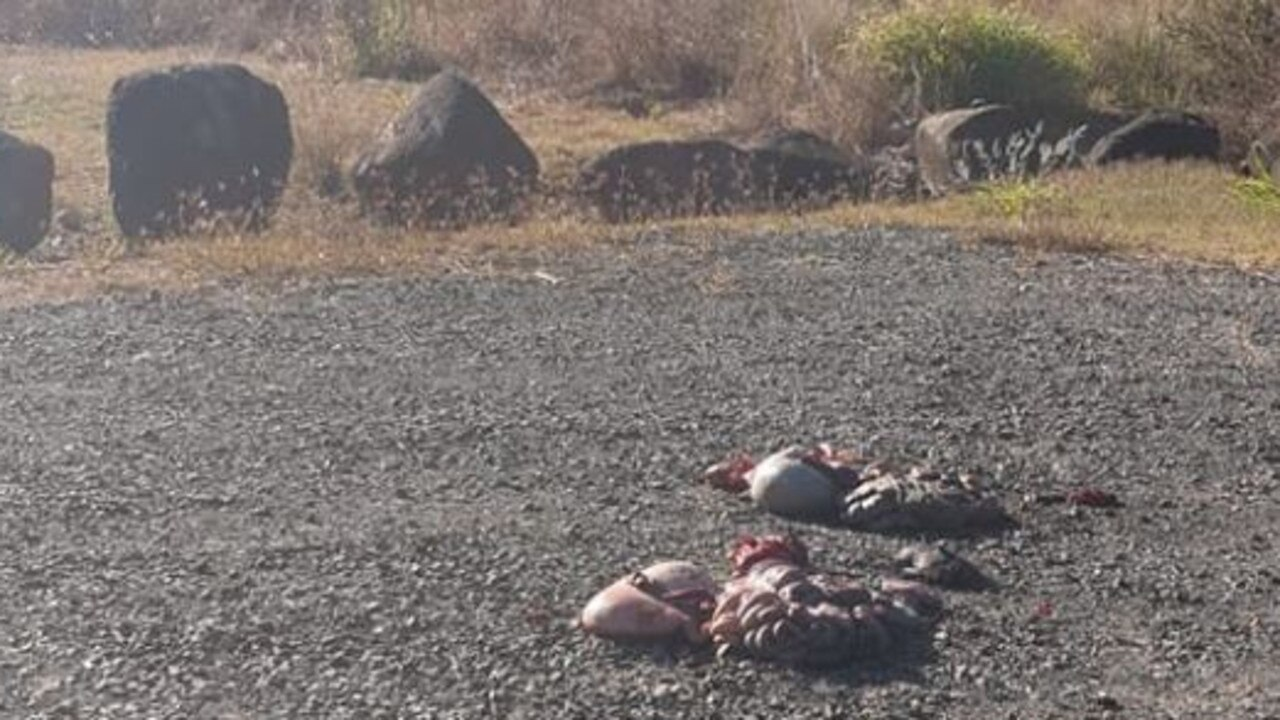 Animal remains left at the Bucca Crossing car park.