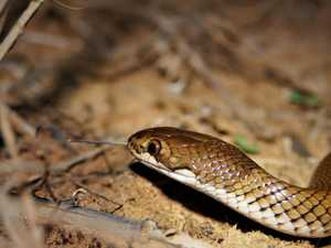 UPDATE: Woman hospitalised after suffering snake bite