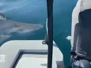Shark takes bite out of fisherman's boat