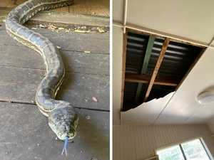 Huge snakes crash through kitchen ceiling