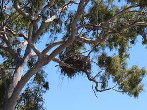EMPTY NEST: Why one of Bay's best-known birds is missing