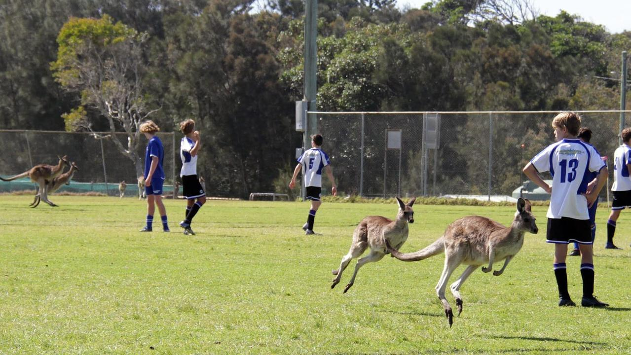 Several crazed football fans can be seen here invading a Woopi field during an under 15s match. It is unknown if they are affiliated with the Northern Storm, Woolgoolga United or Western Sydney Wanderers. Photo: Annie Vaughan