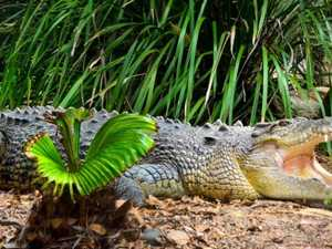 Legendary crocodile Caesar passes away
