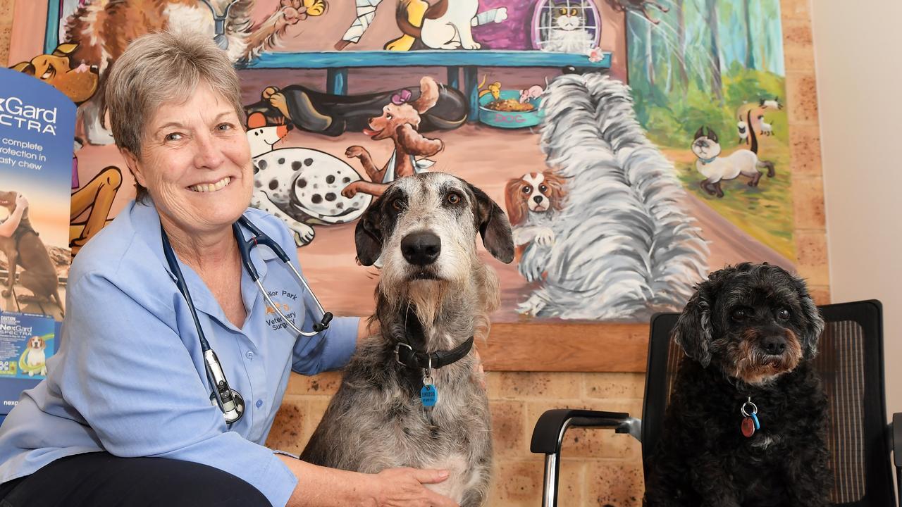 Chancellor Park Veterinary Clinic owners Sebastian Olasek and Annabel Shepherd have revealed their innovative
