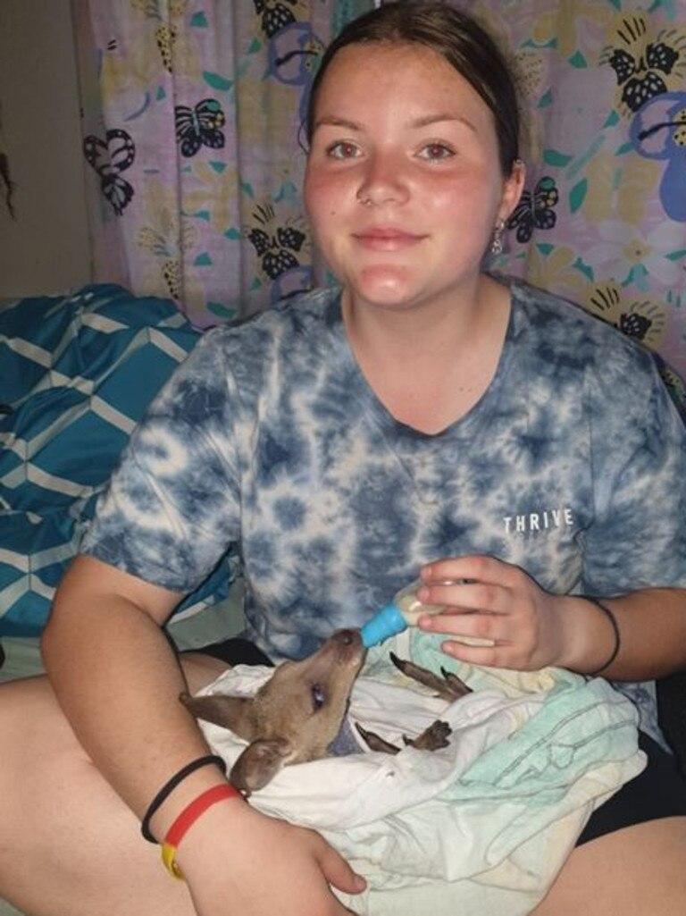 Nicole Sloan's daughter Chloe nurses a joey back to health.