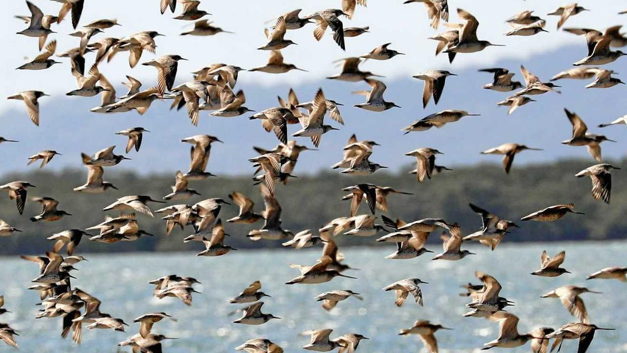 Migratory birds on the wing, too much disturbance by boats and people can exhaust them for their epic flights.