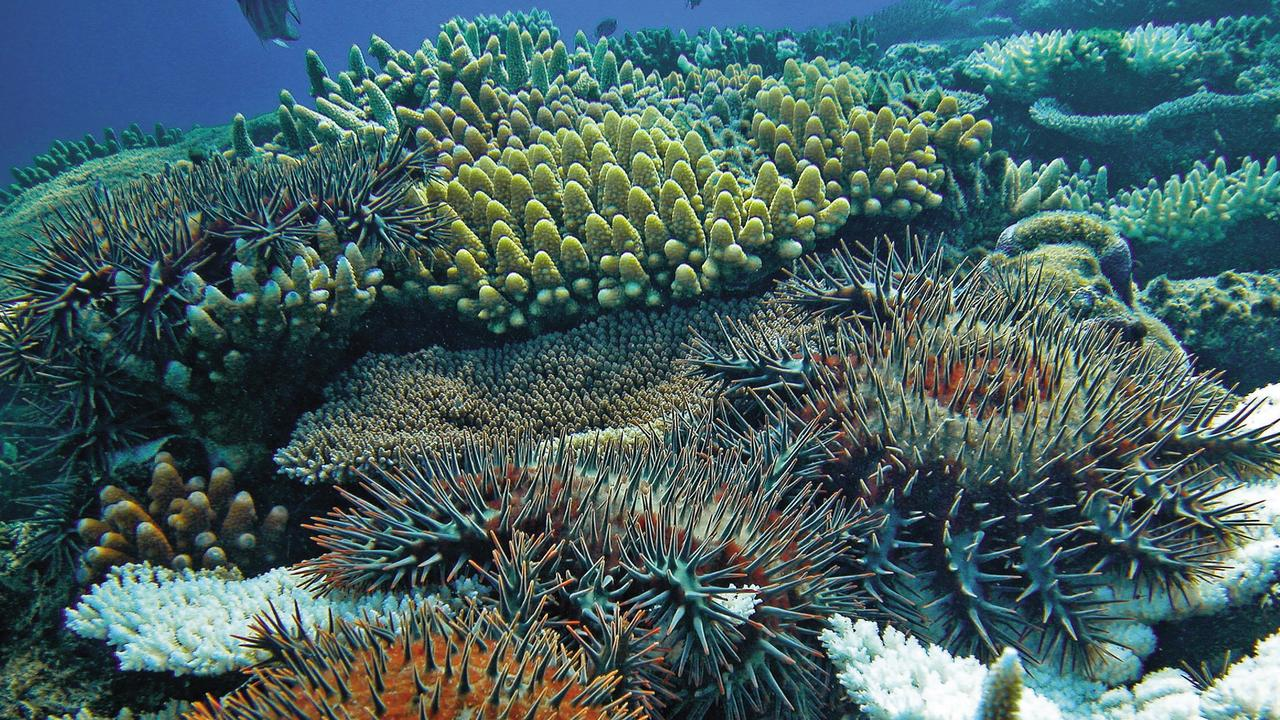 "The notorious crown-of-thorns starfish can be detected on the Great Barrier Reef with a simple ""dipstick test"" thanks to the work of Queensland scientists."
