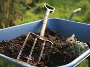 Tourist caught growing 19 cannabis plants at Gatton home