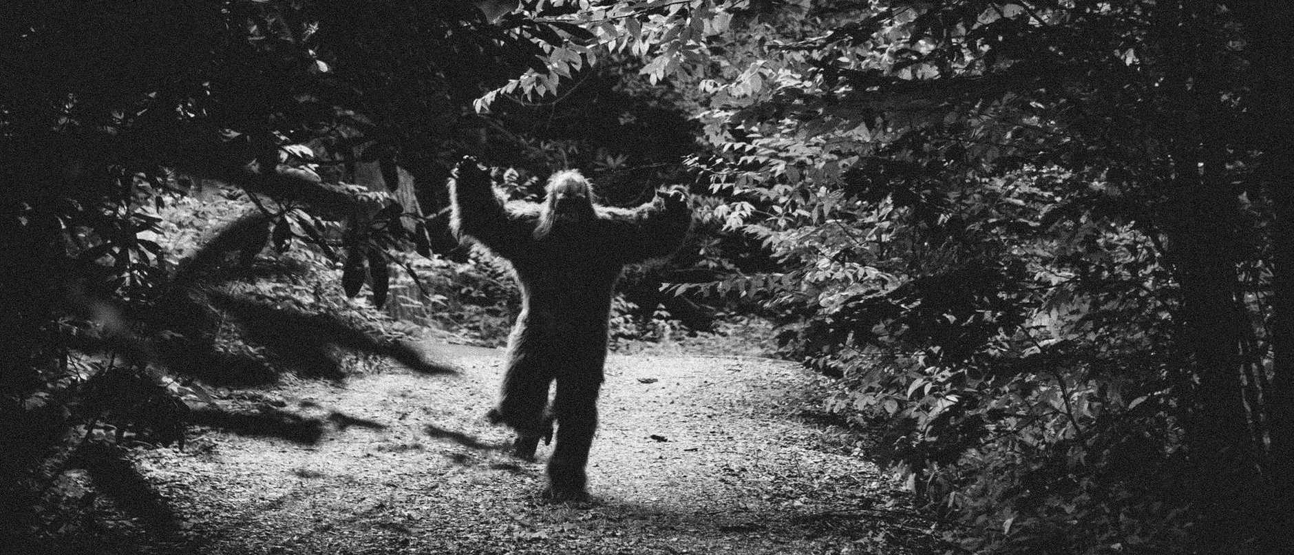 bigfoot attacking