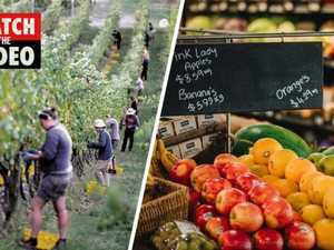 Why fruit and veggie prices are set to soar in Australia