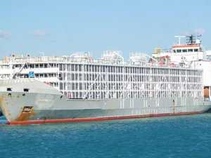Australian live export ship believed capsized after typhoon