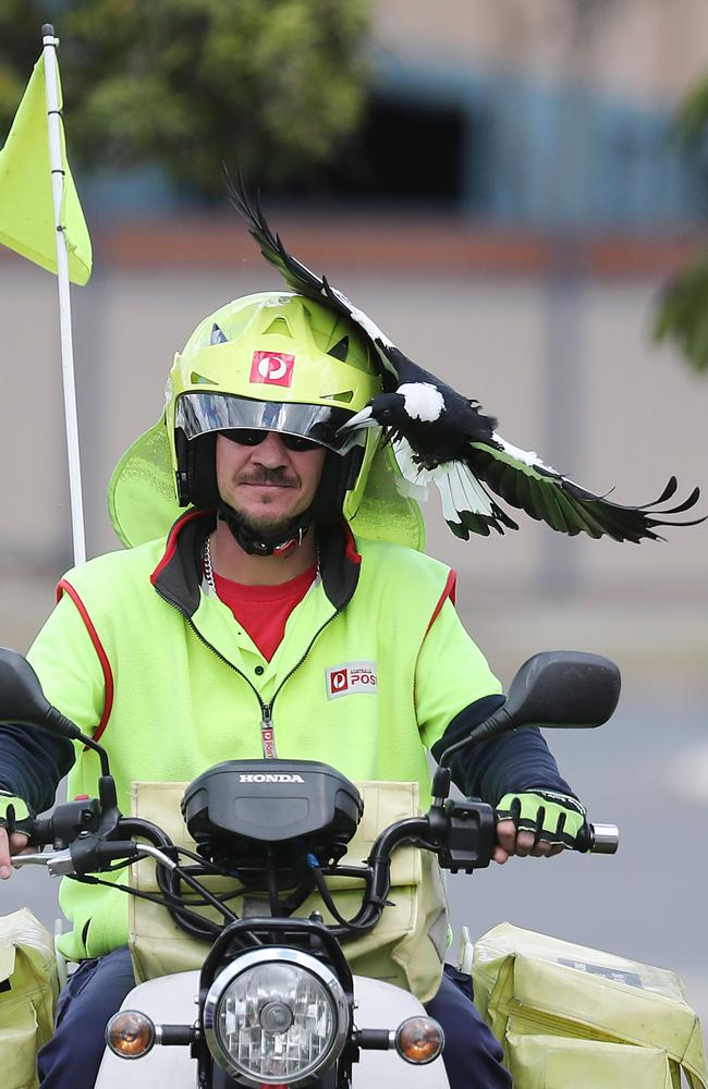 Postie Jeff Kreis says he's a target for magpies because of his hi-vis gear. Picture: Peter Wallis