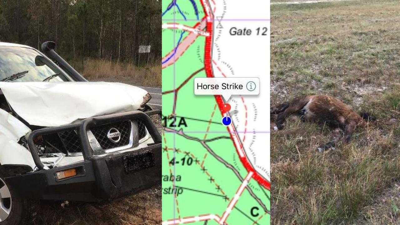 A horse struck on Cooloola Coast Rd by a car is the latest in several to die in the region from crashes.