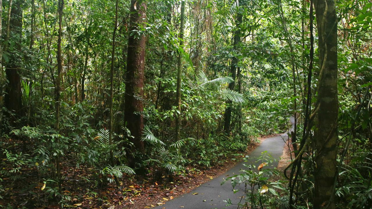 The World Heritage listed rainforest surrounding Cairns. PICTURE: BRENDAN RADKE