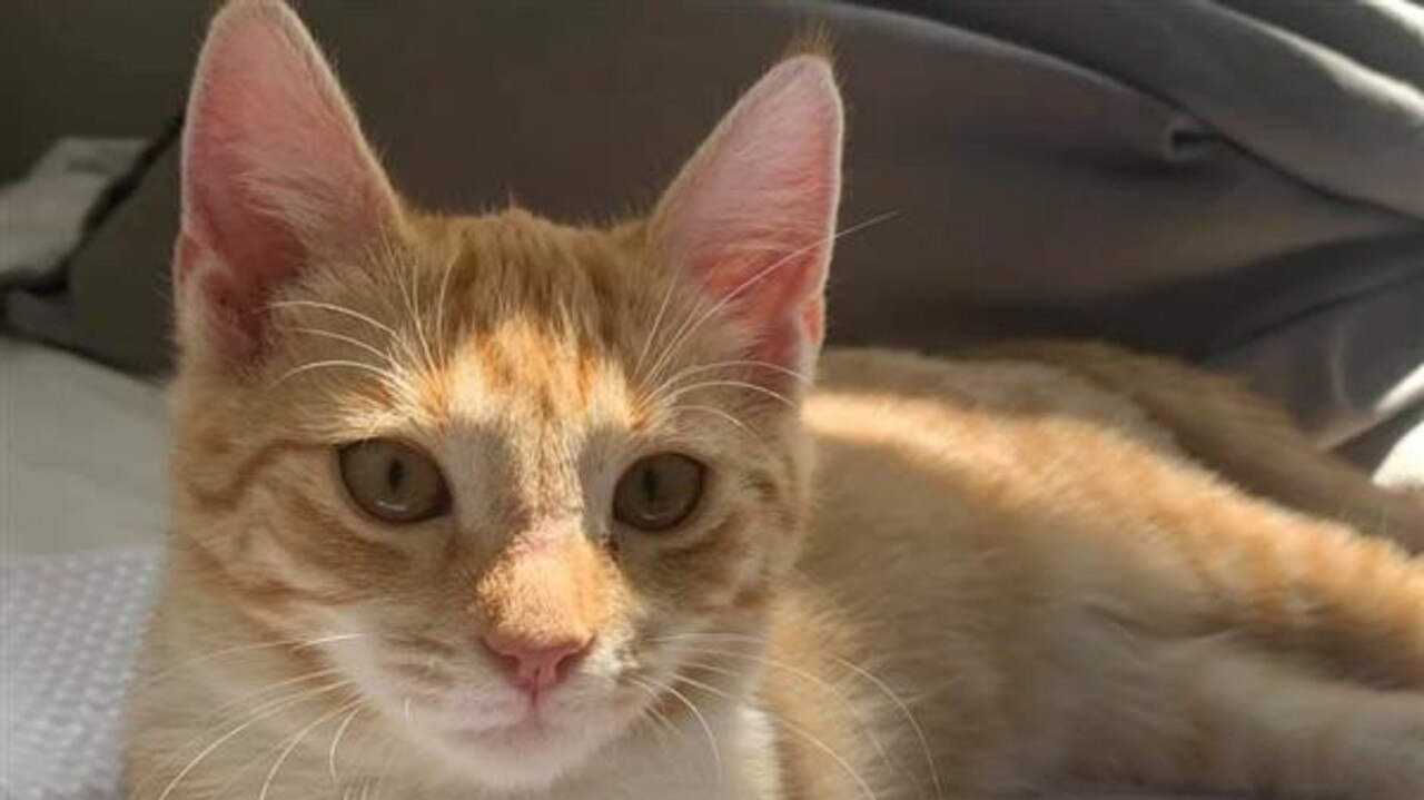 Gingersnap is looking for a new home