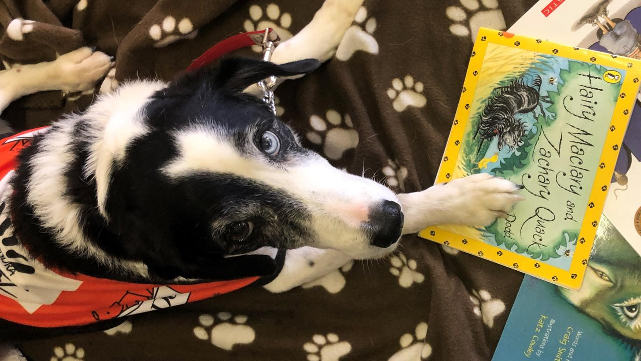 Story Dog Jemma dazzled the crowd in Kilkivan during the week.