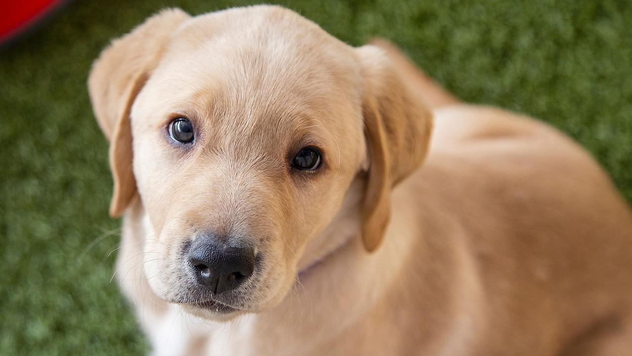 From 3,442 name suggestions, the final five were chosen to best match the puppies' personalities by the team who had been looking after the pups in the Guide Dogs Nursery.