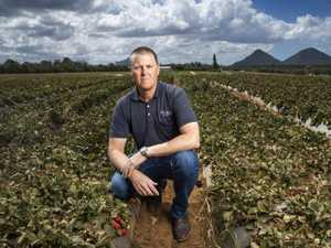 Desperate farmers offering up to $3800 for 'gun' workers