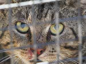 VOICES FOR THE EARTH: Domestic cats and wildlife
