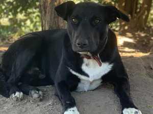 Buddy's Clarence spirit makes him nation's hardest working dog