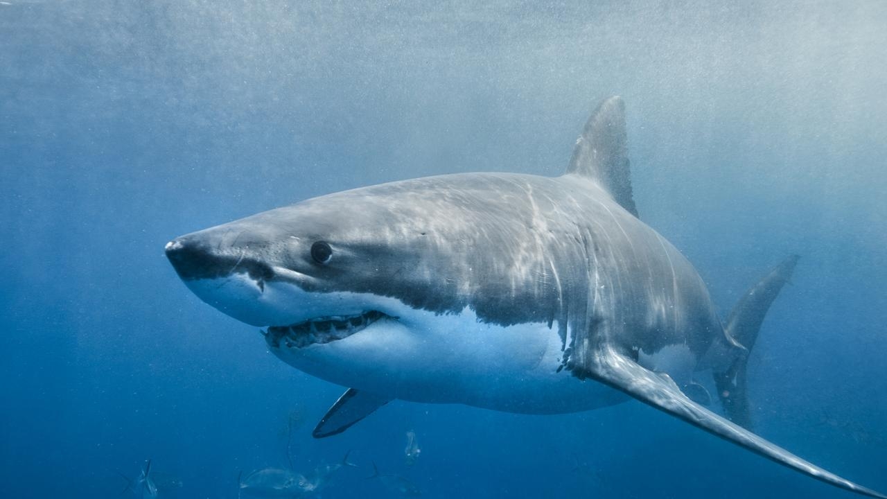 The NSW Government has launched its $8 million shark mitigation program. iStock