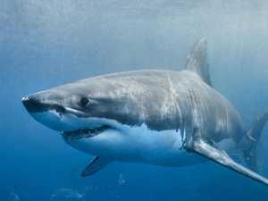 New shark mitigation program to keep coast safer