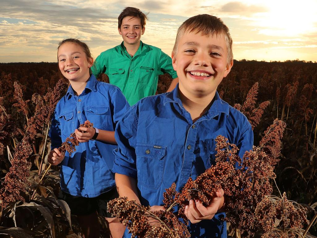 Emmysen Crothers, 11, Braithen Crothers, 12, and Ashton Crothers, 9, of Breza Farming, in the late summer crop of sorghum being harvested at St Ruth, 10km south of Dalby. Picture: Liam Kidston