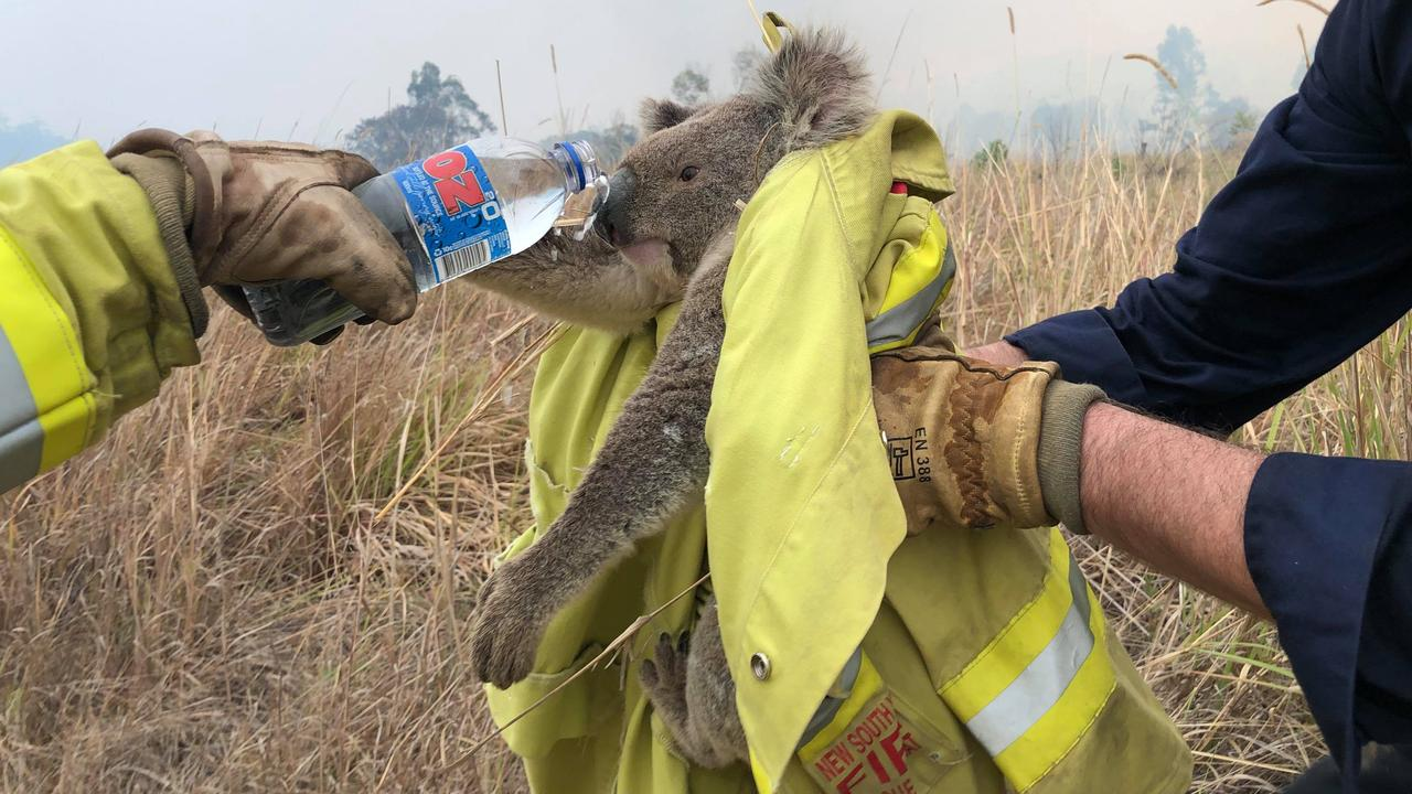 Firefighters from a Fire Rescue NSW strike team helping a koala during the recent devastating bushfires. PHOTOS: Paul Sudmals