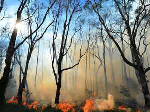 Burn to reduce fuel and get plantations back on track