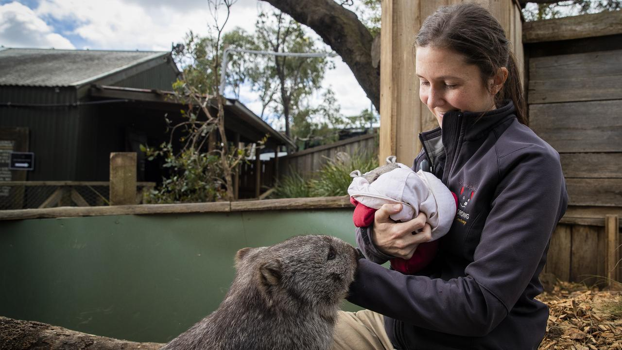 Co-head keeper Monique Spaulding with 6 month old wombat Lenny. Picture: RICHARD JUPE